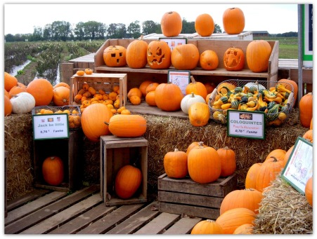 pumpkin-farm-busyasabeeinparis-blog